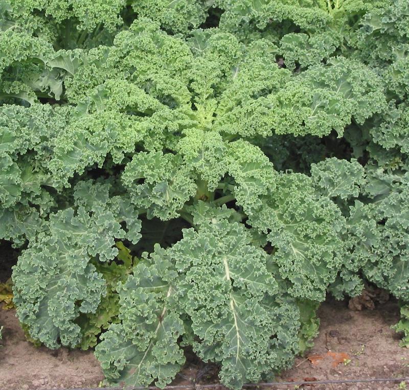 16 superalimentos vegetales para 2016