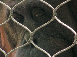 Lugares que debes evitar en Madrid si respetas a los animales