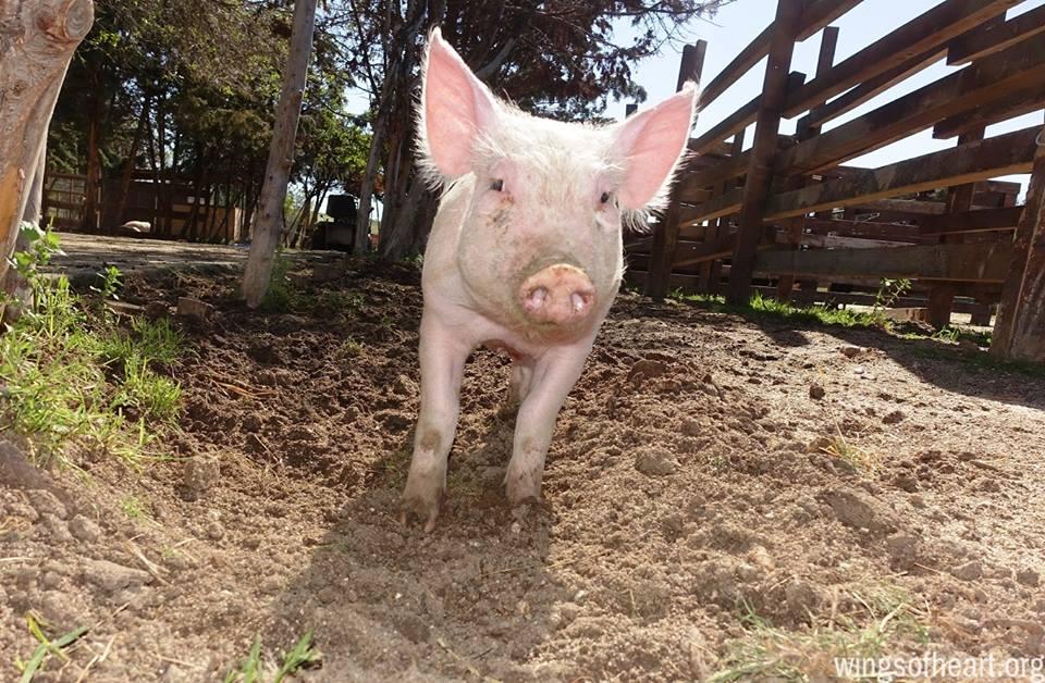Dónde acudir y cómo ayudar en Madrid si respetas a los animales