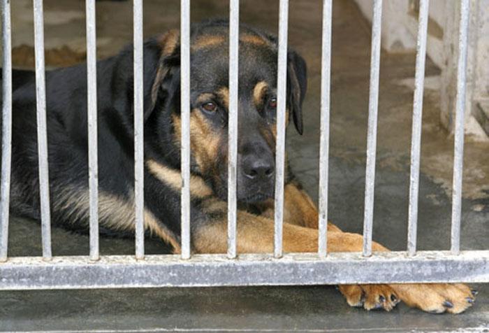 Nueva Ley de Protección de Animales de Compañía en Madrid