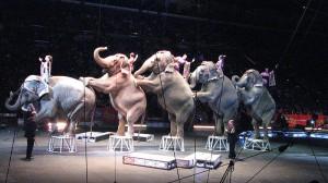 El Ayuntamiento de Madrid aprueba la propuesta que valora prohibir la presencia de animales salvajes en circos