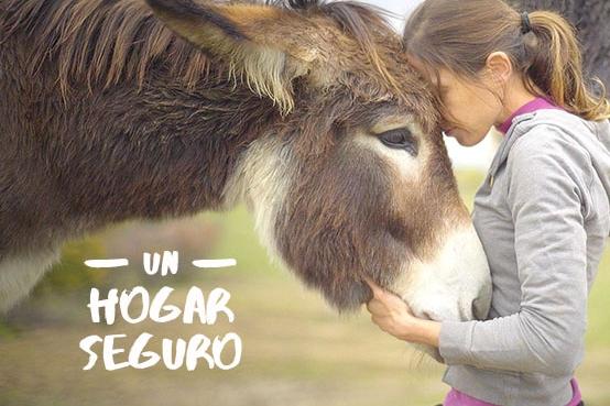 #UnHogarSeguro, la campaña de Wings of Heart para cubrir las necesidades de sus habitantes