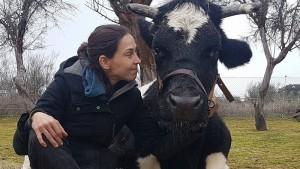 Carmen, la vaca de Wings of Heart, no va a ser sacrificada por la Comunidad de Madrid