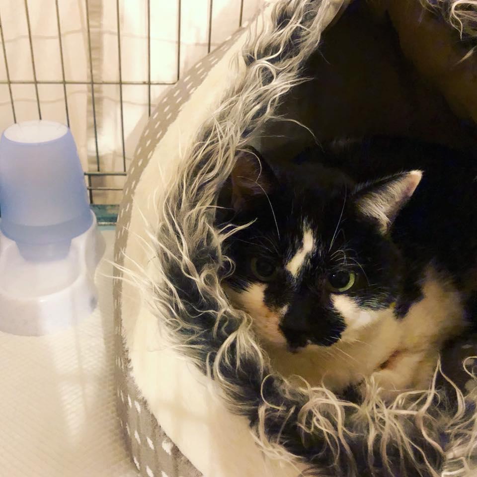 Tapeo vegano a favor de Eneas de Homeless CATS