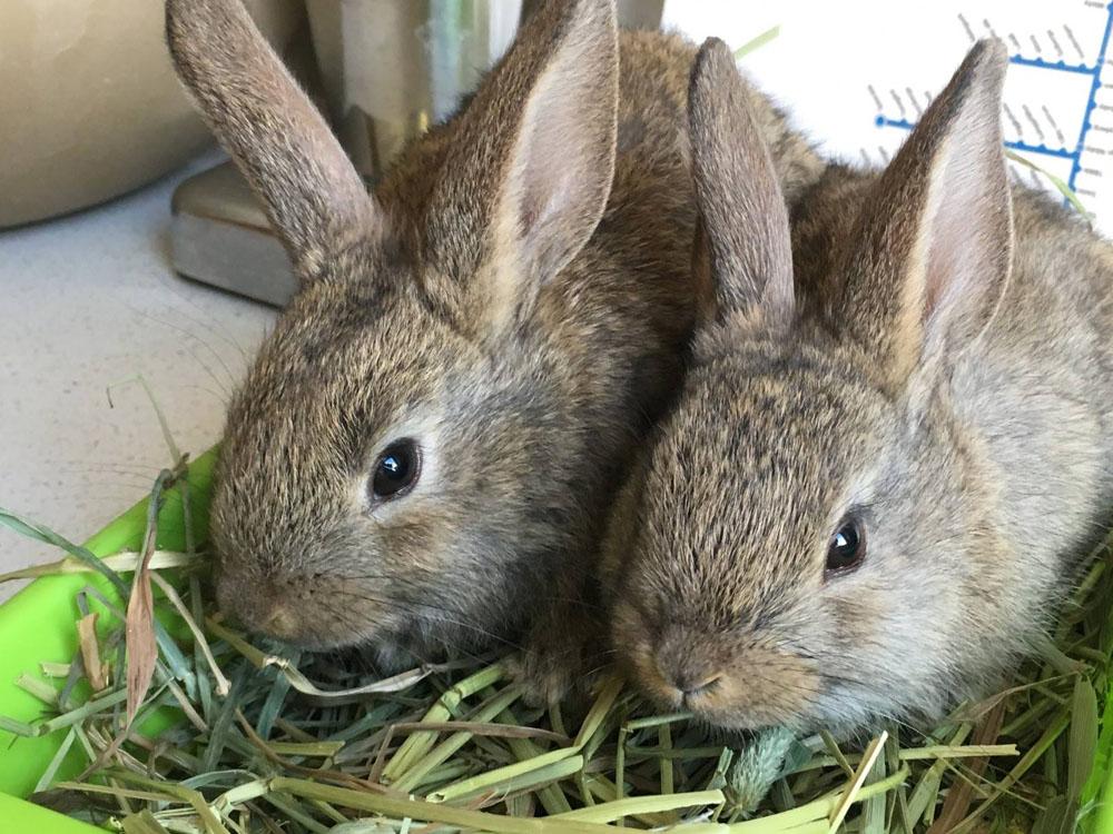 """La Madriguera conciencia sobre el cuidado de los conejos tras el estreno de """"Peter Rabbit"""""""