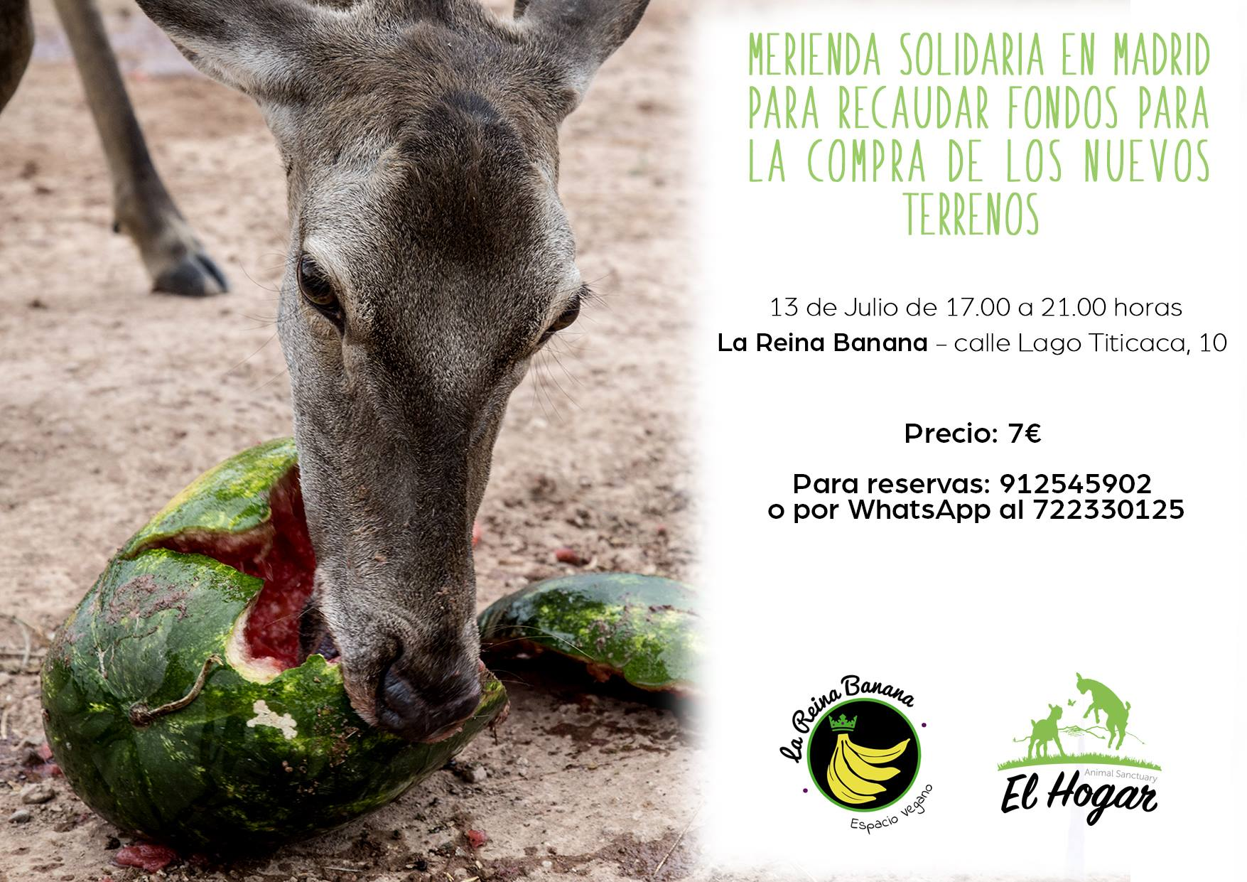 Merienda a favor de El Hogar Animal Sanctuary en La Reina Banana