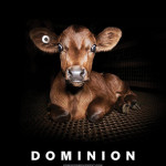 proyeccion-dominion-la-magdalena