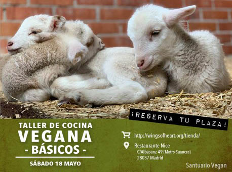 Taller de cocina vegana básica a favor del santuario Vegan (mayo)