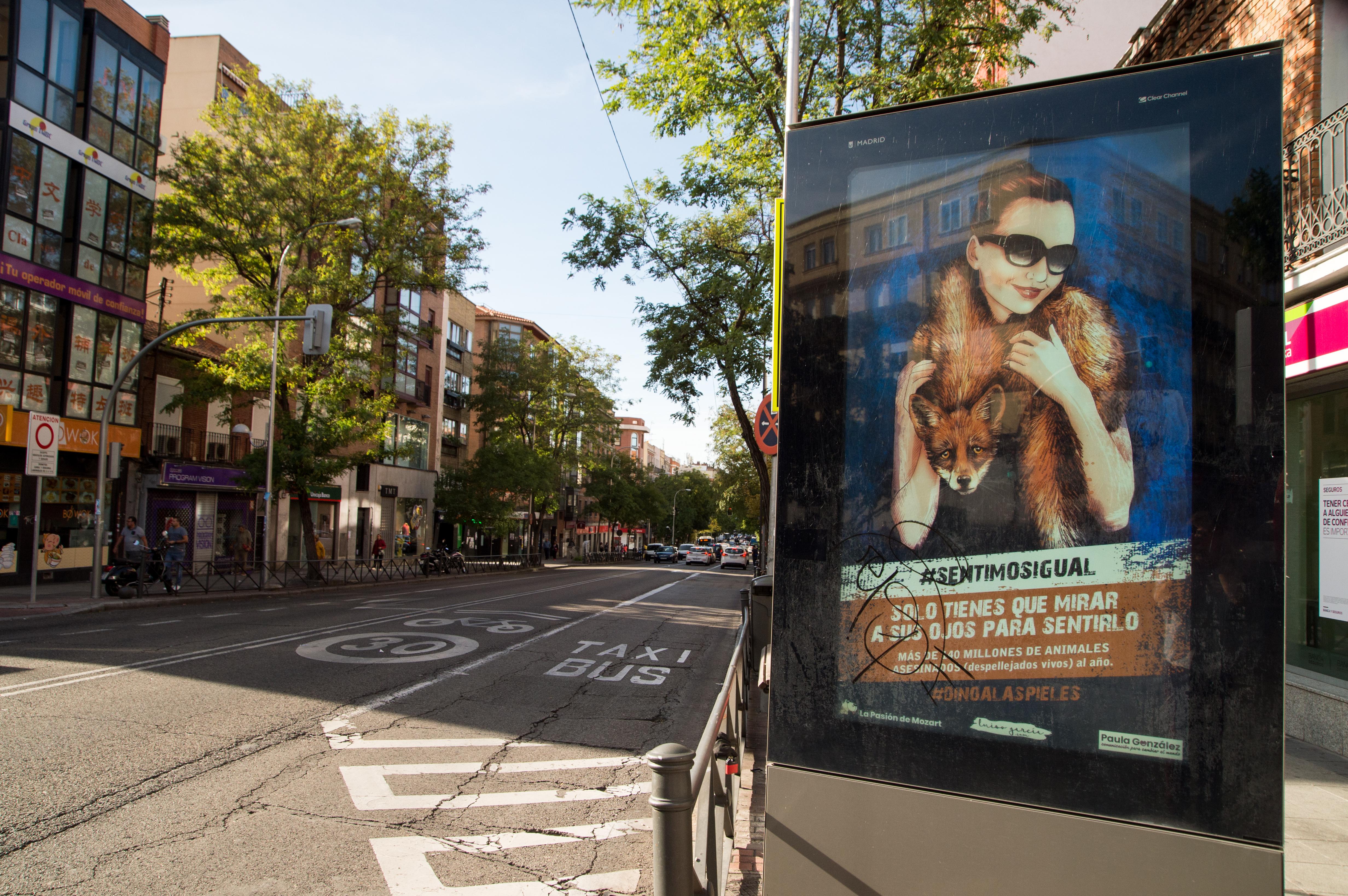 """""""Sentimos Igual"""", la realidad de los animales en las calles de Madrid"""