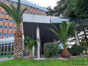 Mi participación como vegana en un estudio de lactancia en Madrid