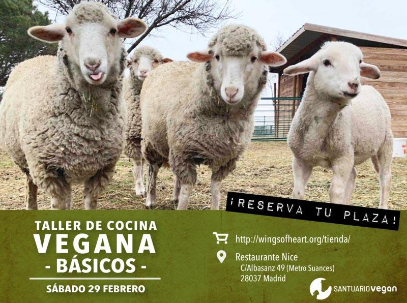 Taller de cocina vegana básica a favor del santuario Vegan (febrero)