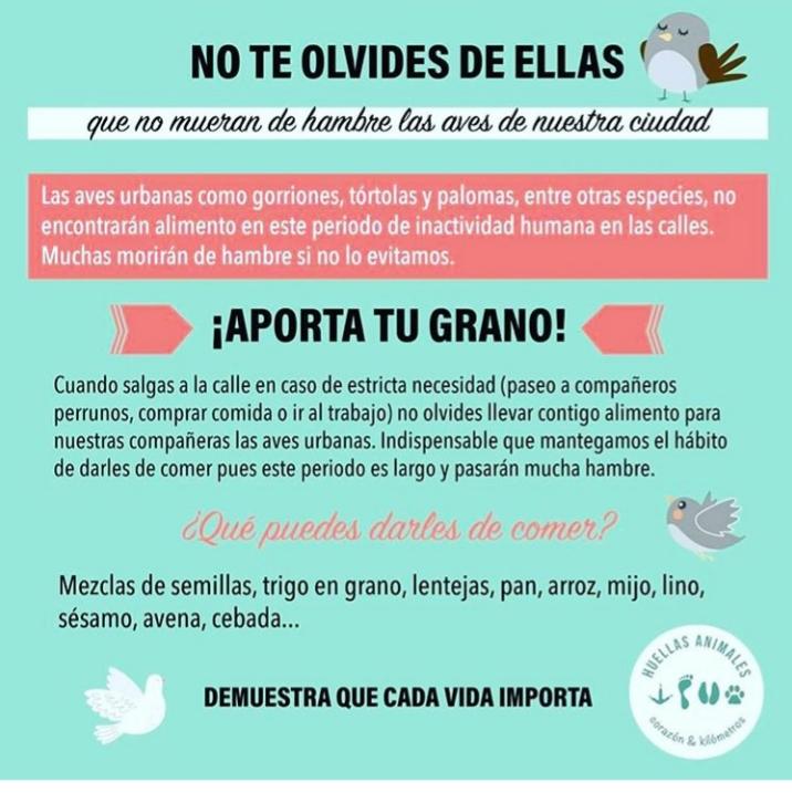 Palomas_aves