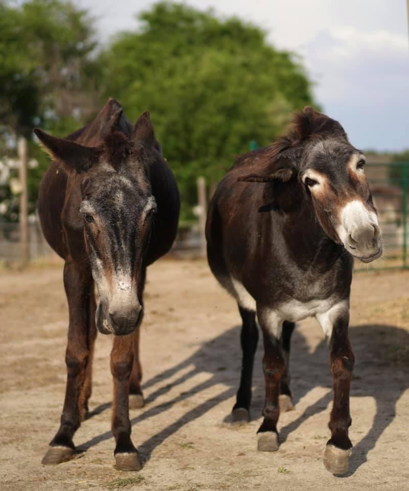 Santuarios de animales en España