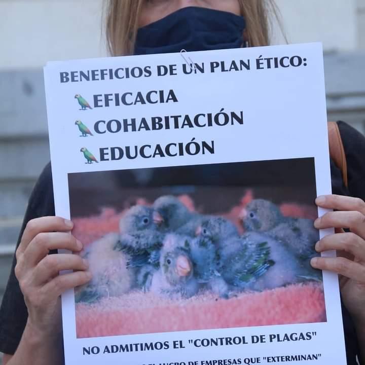 El Ayuntamiento de Madrid planea exterminar a miles de cotorras