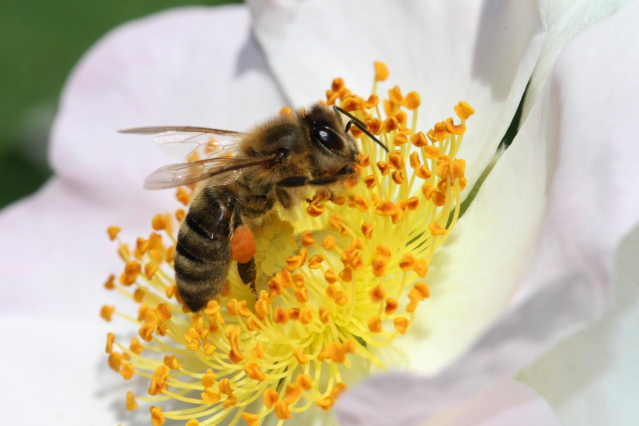 ¿Por qué miel no?